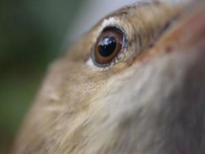 curso-aves-sierra-morena