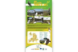 Aves Observables y Rutas Ornitológicas Sierra Oeste de Madrid_2