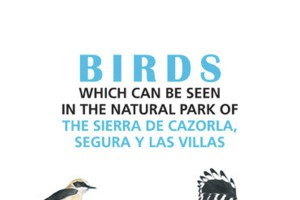 Birds which can be seen in the natural park of sierra de cazorla, segura y las villas