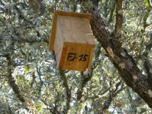 Caja nido Algakon