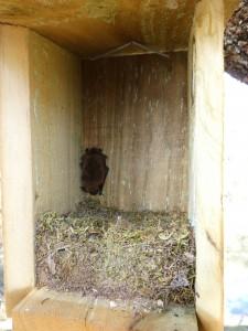 Caja nido murcielago