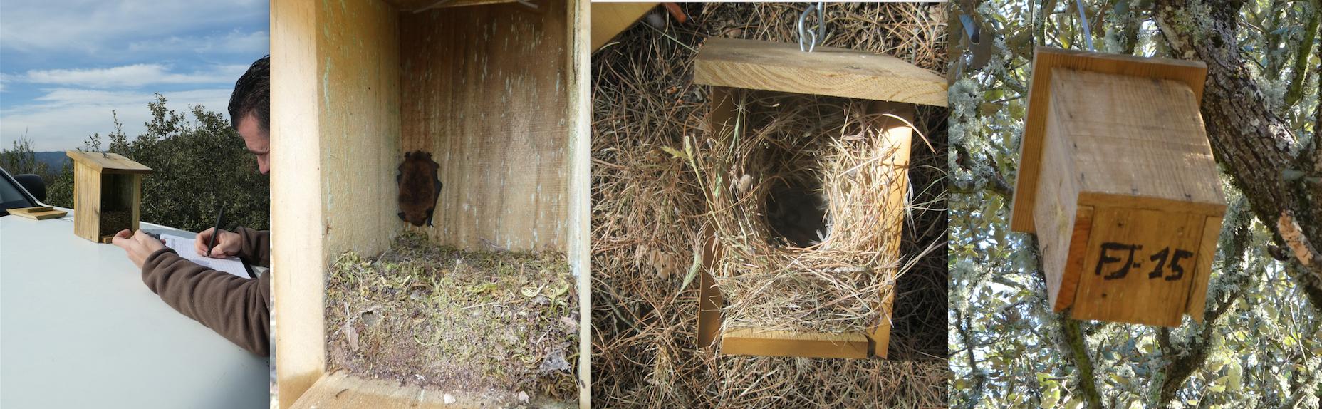 cajas nido Algakon