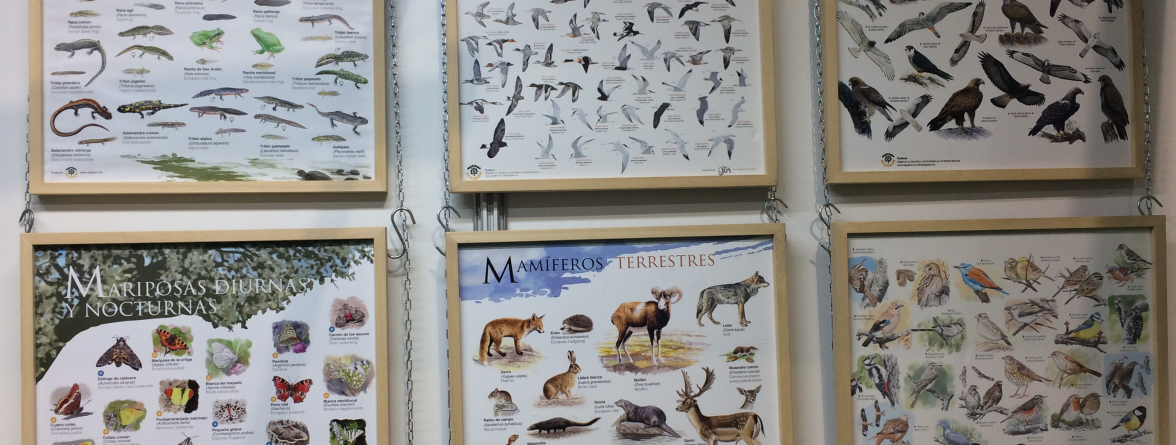 coleecion poster fauna iberica