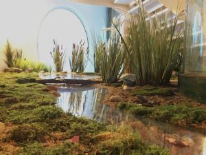 Algakon ambiente acuatico