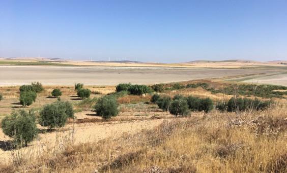 restauracion ecologica lagunas Algakon