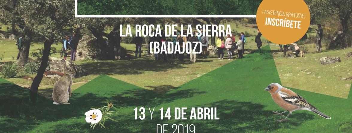 FESTIVAL DE AVES DE LA ROCA 2019 Algakon