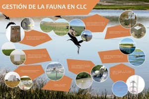 Medidas Compensatorias Avifauna para CLC - ALGAKON