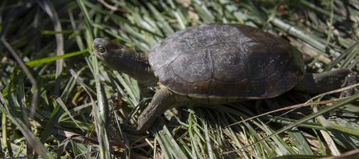captura fauna medidas compensatorias Algakon