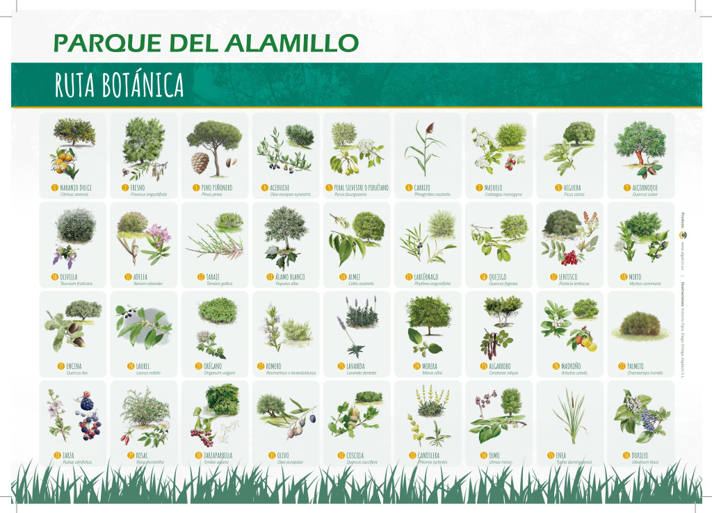 folleto ruta botánica Alamillo2_Algako