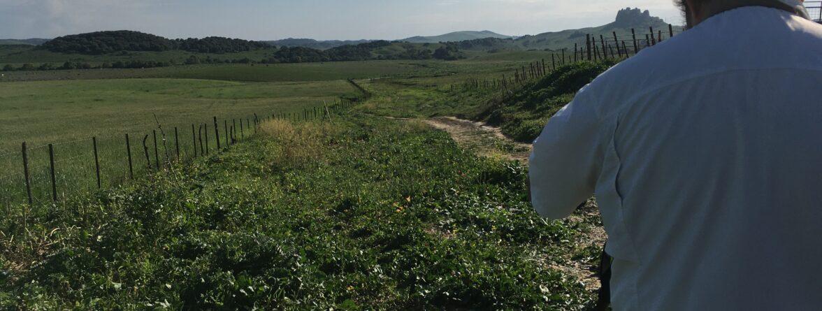 cernso aves Planta Solar Alcornocales (Cádiz)